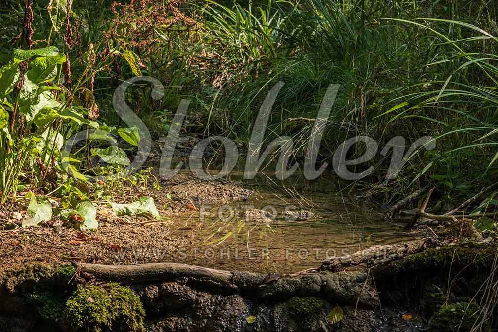 Riedbächlein, Ziefen (BL)   Ein kleines idyllisches Bächlein im Riedbachtal in Ziefen, Kanton Baselland.