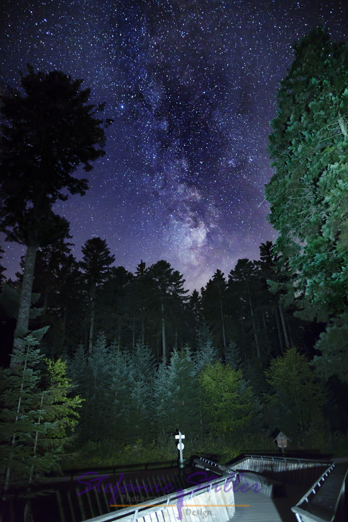 Black Forest by night