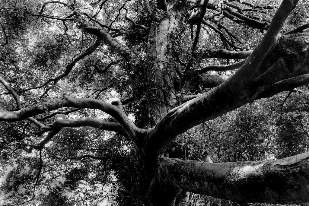 Baum in Nordirland | Baum in Nordirland die immer grüne Insel