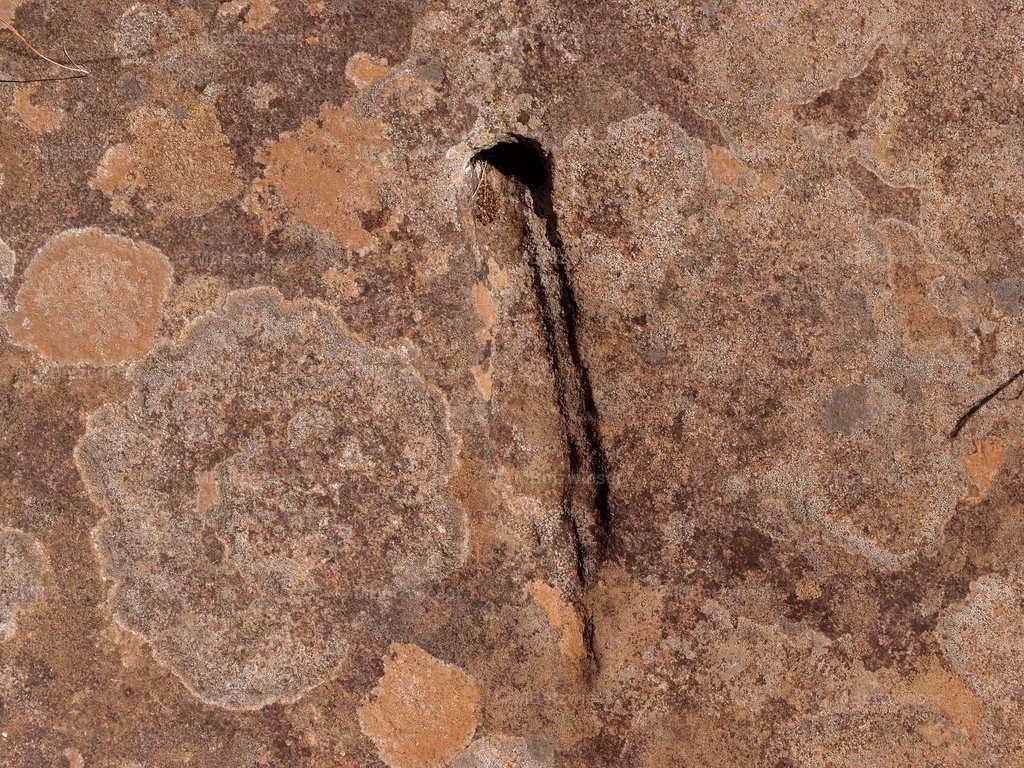P5286288 | aus der Guanchenzeit
