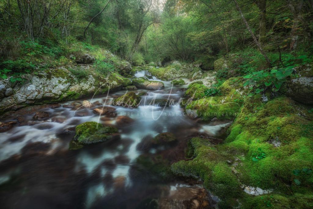 Fluss ins Grüne