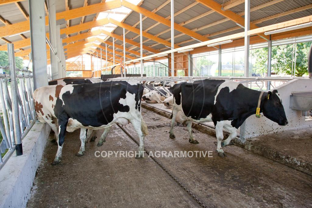 20110627-IMG_3053 | Milchkühe im Boxenlaufstall