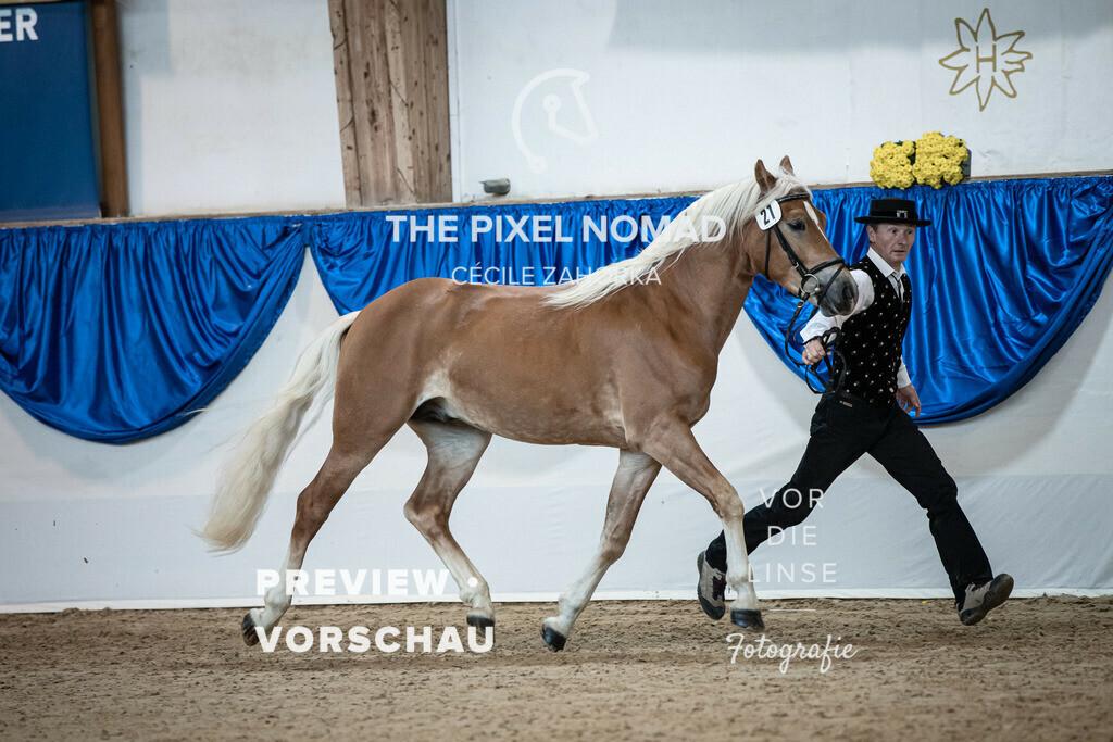201011-KoerM-21-Nesquik016 | Nesquick v. Neymar, a.d. Nena v. Arogno Horse Gym's Franzl Edelbluthaflinger Foto: www.vor-die-linse.de