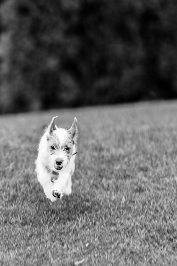 dogs--elmar.pics_5860