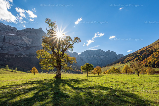 Gegenlicht am Großen Ahornboden | Nur wenige Tage dauert der Herbst im Engtal bei Hinterriß in Österreich. Sobald es nachts kalt wird und der erste Frost kommt, färben sich die Blätter und kurze Zeit darauf fallen sie bereits ab.