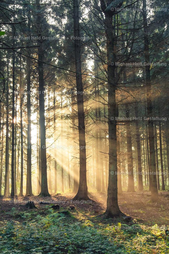 Sonnenstrahlen im Wald | Sonnenaufgang im Wald bei Pratjau