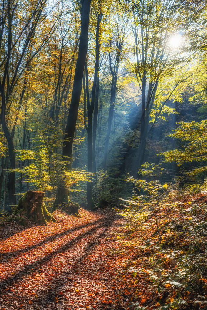 Waldweg im Herbst im Teutoburger Wald | Waldweg im Teutoburger bei Kirchdornberg im Herbst.