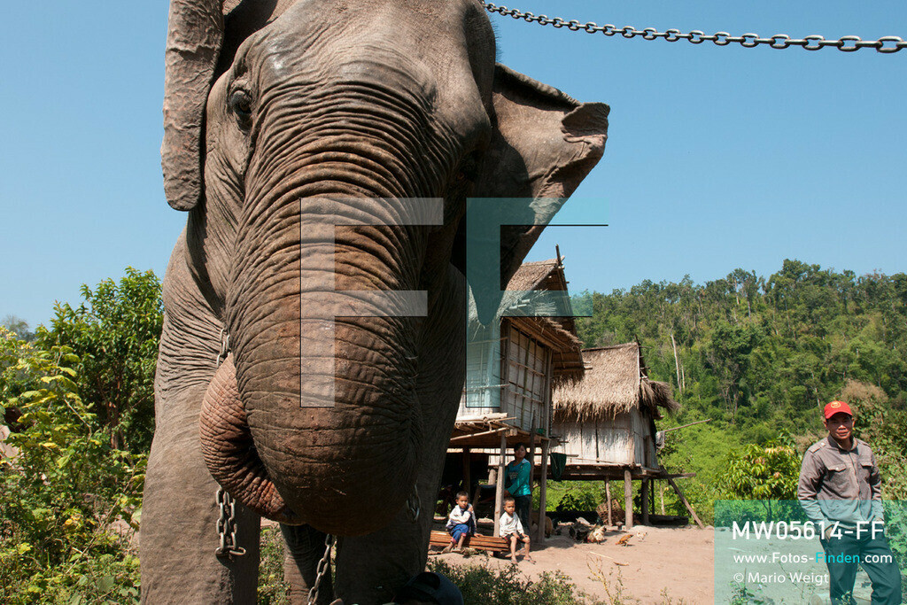 MW05614-FF | Laos | Provinz Sayaboury | Reportage: Arbeitselefanten in Laos | Einige Mahuts leben mit ihren Familien und Jumbos in Waldnähe. Lane Xang -