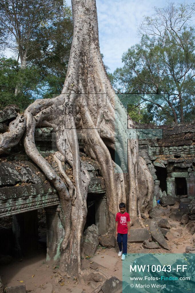 MW10043-FF | Kambodscha | Siem Reap | Reportage: Sombath erkundet Angkor | Sombath geht an den großen Wurzeln eines Kapokbaumes im Dschungeltempel Ta Prohm vorbei.  Der achtjährige Sombath lebt in Kambodscha im Dorf Anjan, sechs Kilometer westlich von Siem Reap entfernt. In seiner Freizeit nimmt ihn manchmal sein Onkel in die berühmte Tempelanlage von Angkor mit. Besonders mag er die riesigen Wurzeln der Kapokbäume, die auf den uralten Mauern wachsen. Seine Lieblingstempel in Angkor sind Ta Prohm, Banteay Kdei und Preah Khan.  ** Feindaten bitte anfragen bei Mario Weigt Photography, info@asia-stories.com **
