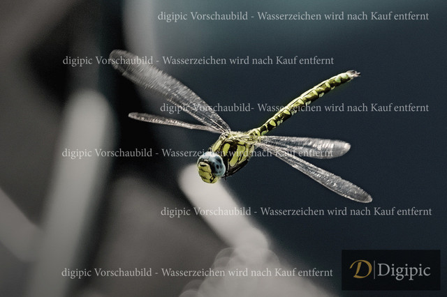 Libelle2 - Vorschaubild | Libelle im Flug