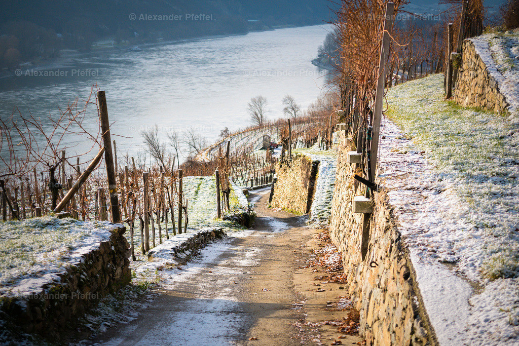 wachau_winter_weingarten_(c)apfeffel_ (35)
