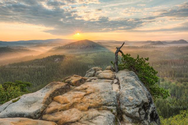 Morgens im Elbsandsteingebirge | Einsam und allein wächst diese Kiefer am Rand eines Felsens in den Affensteinen. Den Kopf nach unten geneigt, fristet sie dort bereits seit über 100 Jahren Ihr Dasein. Wind und Wetter können ihr scheinbar nichts anhaben. Morgens um den Sonnenaufgang herum ist sie ein wunderbares Motiv um die Schönheit des Elbsandsteingebirges in einer einzigartigen Stimmung festzuhalten.