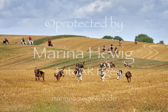 Jagd Knoop 217495_Marina Hewig