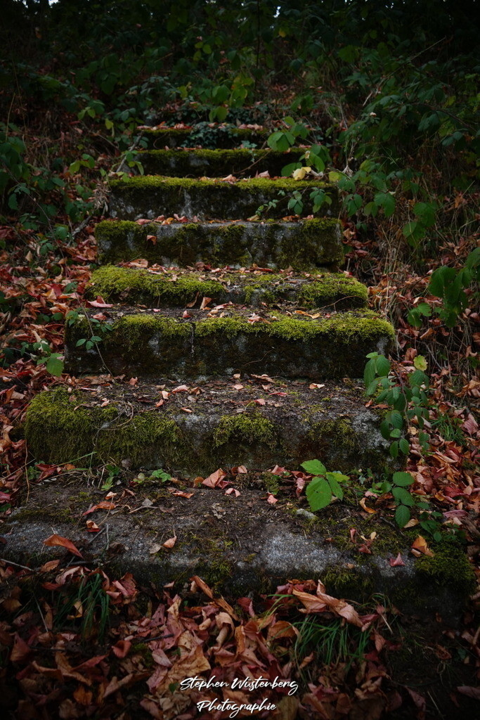 Stairway to...  |