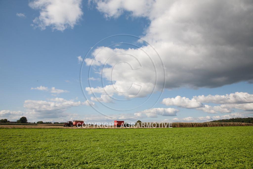 20080914-IMG_9138 | Silomais wird gehäckselt - AGRARFOTO Bilder aus der Landwirtschaft