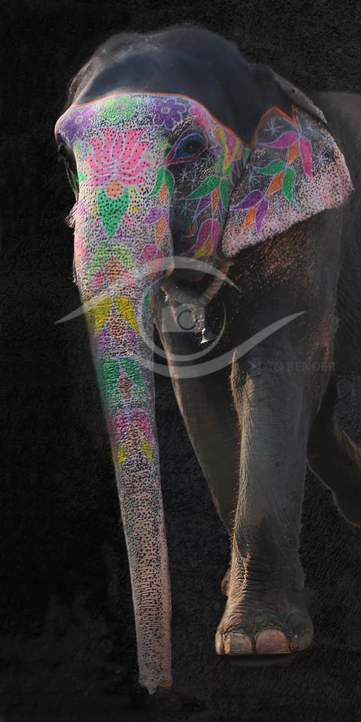 Indischer_Elefant 2zu1