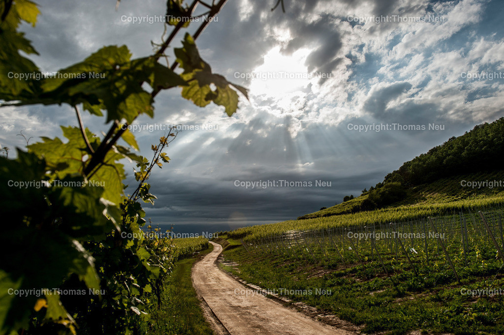 Juni_2013-3 | Weinberge,,,Bild: Thomas Neu