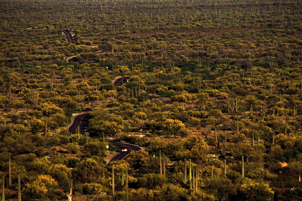 JT030403-041.JPG | USA, Vereinigte Staaten von Amerika, Arizona: Organ Pipe National Monument. Auto auf der Loop road durch den Park.