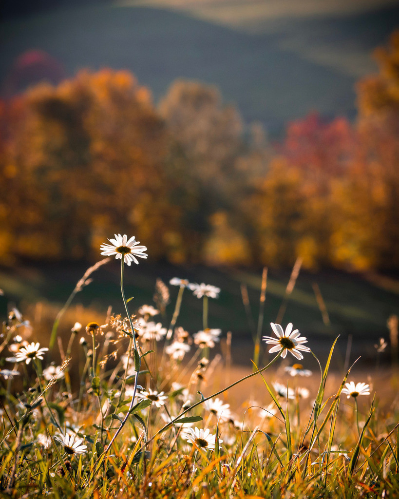 Herbst am Geisberg | Herbstliche Landschaft am Geisberg bei Schuttertal-Schweighausen