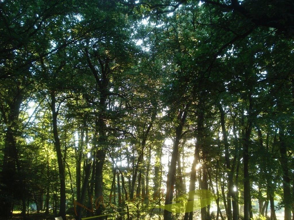 Lichtertanz im Wald