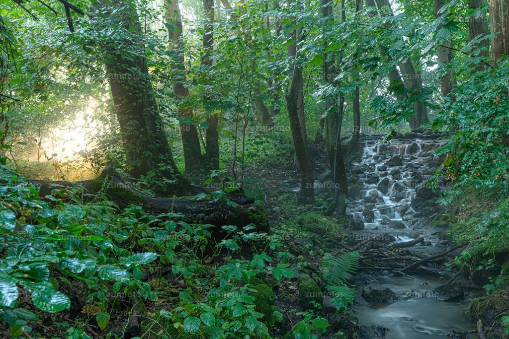 190828_0723-7842-HDR | Ich war gestern früh im Regenwald! Nein natürlich nicht sondern bei der Hell Mühle Klocksin. Ok eine Mühle gibt es da nicht mehr aber den Wasserfall schon. Ich war zum Gewitter wieder draußen und habe Fotos gemacht, sowie wieder draußen geschlafen. Morgens nach dem Sonnenaufgang bin ich dann zum Hellbach und wollte mal schauen wie es dort aussieht nachdem ich im Frühjahr dort aufgeräumt hatte ;-) Nach dem regen ist es einfach herrlich im Wald! :-)