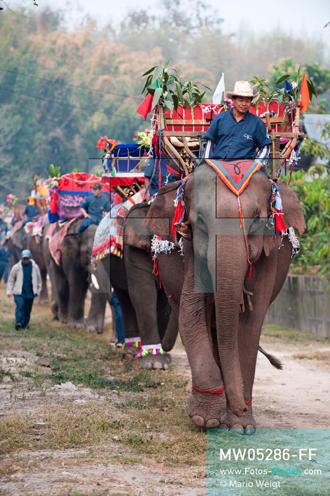 MW05286-FF | Laos | Provinz Sayaboury | Vieng Keo | Reportage: Pey Wan im Elefantendorf | Elefantenprozession durch das Dorf Vieng Keo.  Der achtjährige Pey Wan lebt im Elefantendorf Vieng Keo im Nordwesten von Laos. Im Dorf wohnen ca. 500 Leute mit 17 Arbeitselefanten. Sein Vater Hom Peng hat einen 31 Jahre alten Elefantenbullen namens Boun Van, mit dem er im Holzfällercamp im Dschungel arbeitet. Zum Elefantenfest schmückt Pey Wan den Jumbo und darf mit ihm an der Prozession durchs Dorf teilnehmen. Pey Wan möchte, wie sein Vater, später auch Elefantenführer werden.   ** Feindaten bitte anfragen bei Mario Weigt Photography, info@asia-stories.com **