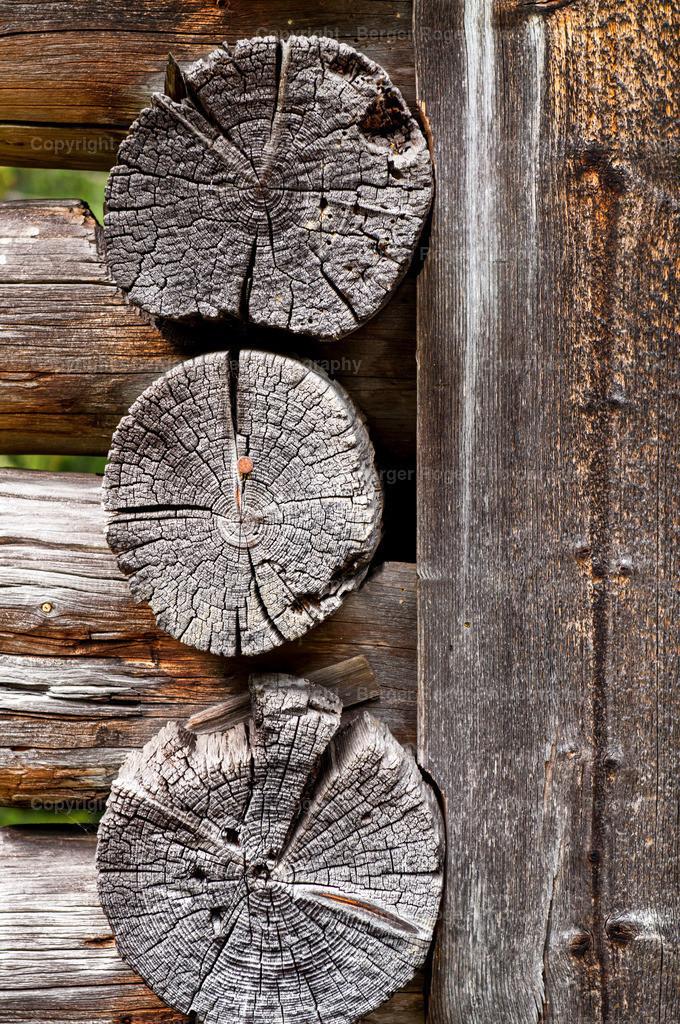 Holz Querschnitt   Textur / Struktur für Fotografen und Grafikdesigner, zum weiterverarbeiten