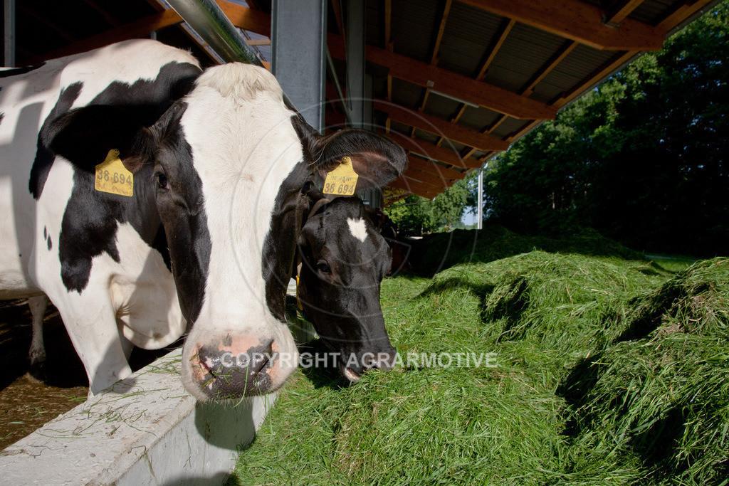 20110627-IMG_3006 | Milchkühe im Boxenlaufstall