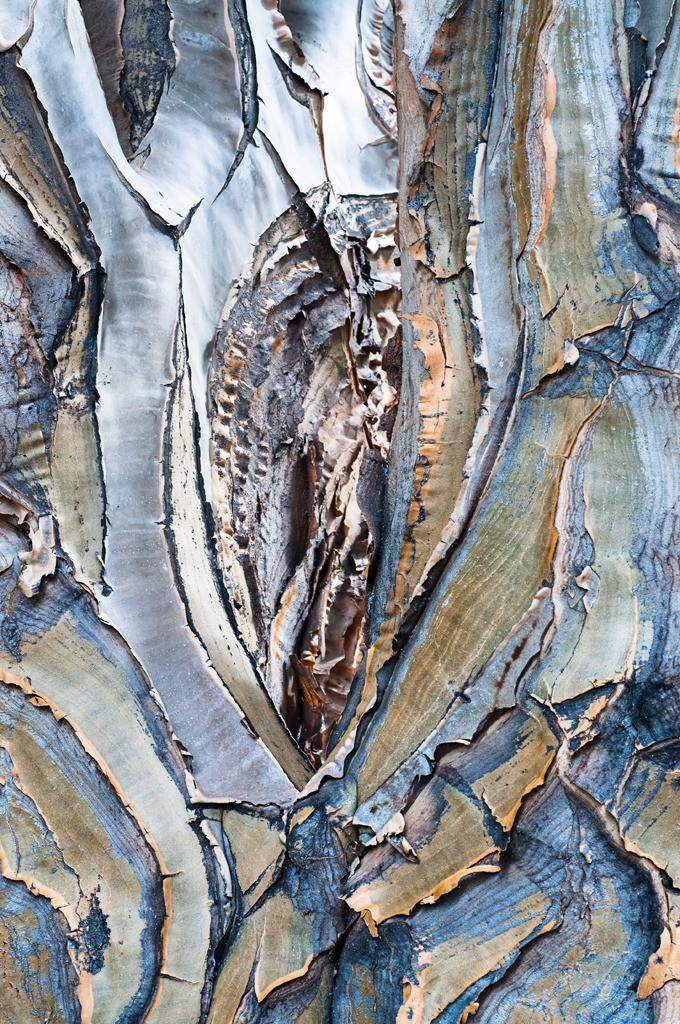 Drachenbaum-Aloe, Aloe dichotoma, Botanischer Garten Bonn | Best. Nr. d_2012_05_0447. Eine Anwendungsidee finden Sie hier: https://www.pictrs.com/soulimages/img/5p6sfz (Besprechungsraum einer FIrma). Weitere Einrichtungsbeispiele sind in der Galerie