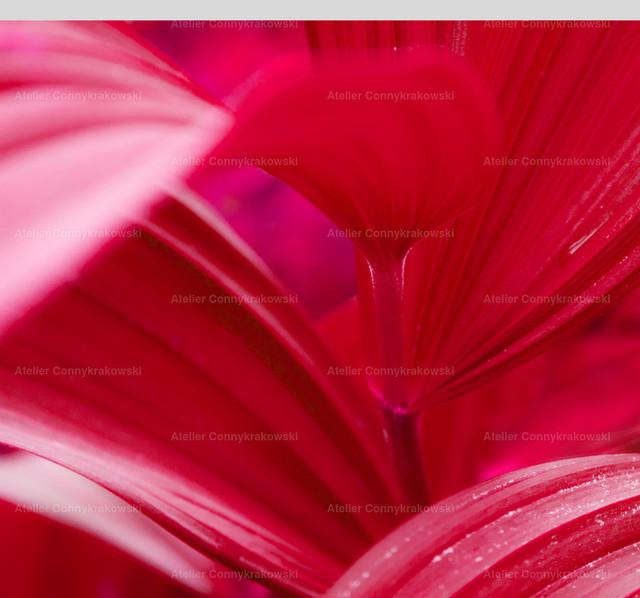 Blätter rot