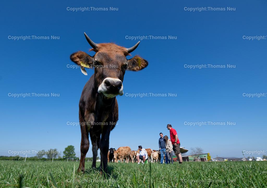 DSC_9983 | Bensheim, Schwanheim, FamilieSchweikert in Schwanheim nach 50 Jahren Viehhaltung jetzt mit ihren Rindern auf die Weiden, ,, Bild: Thomas Neu