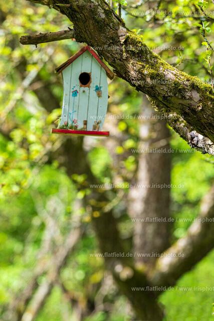 Vogelhäuschen in der Streuobstwiese