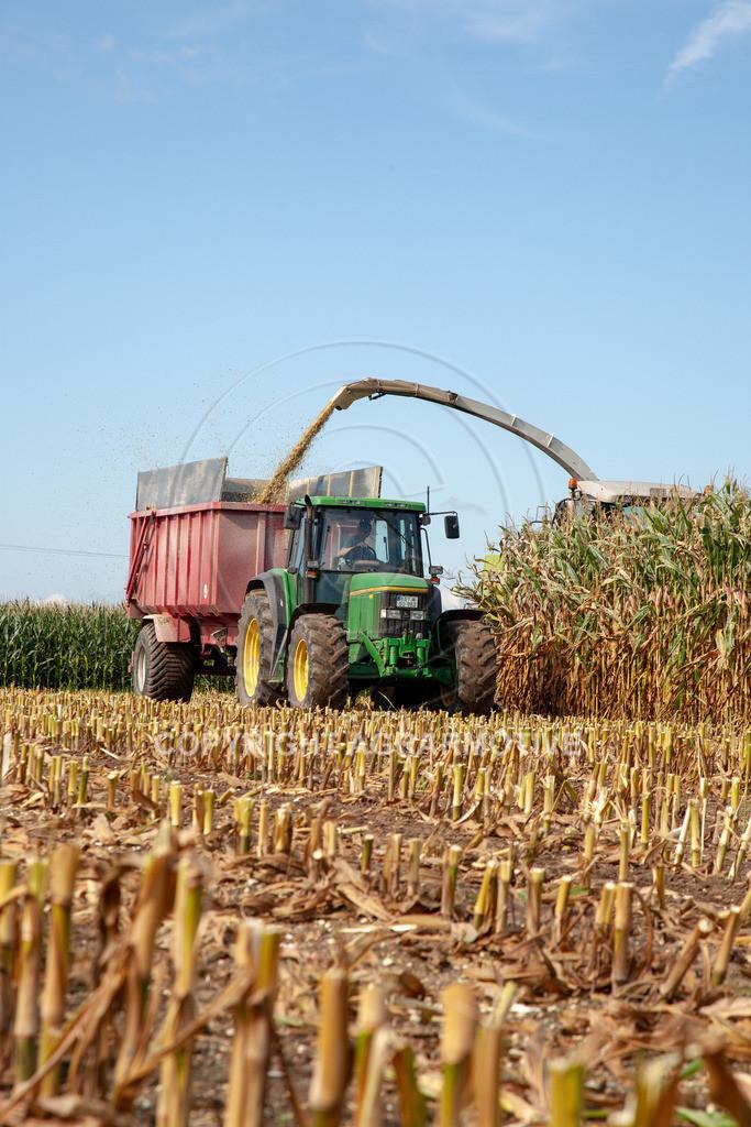 20080914-IMG_8921 | Silomais wird gehäckselt - AGRARFOTO Bilder aus der Landwirtschaft