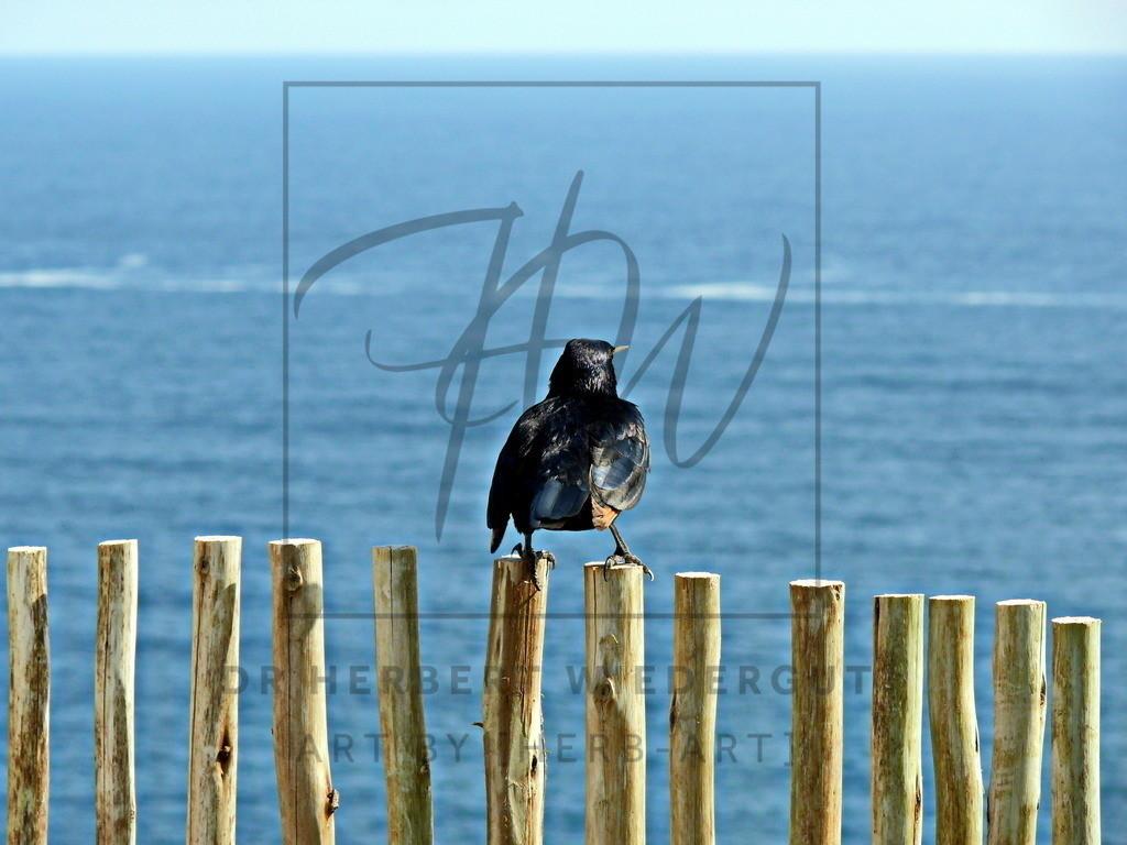 Gute Aussicht | Motiv vom Cape Point in Südafrika.