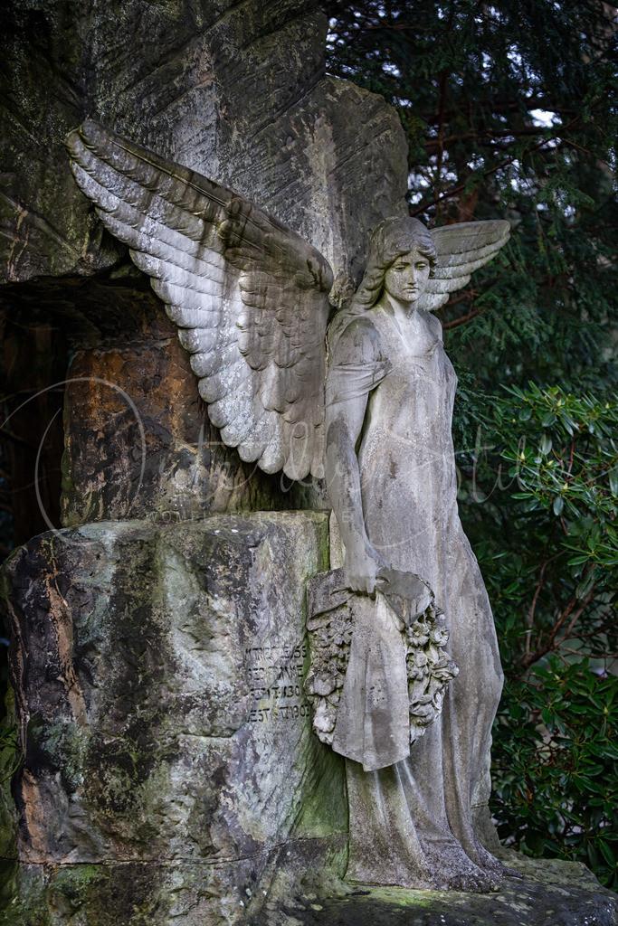 Pleuss Engel-