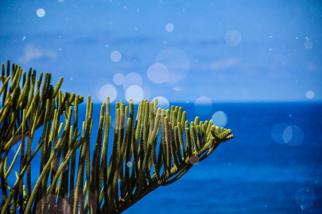 Pflanze im Vordergrund  | Blatt mit Meer im Hintergrund
