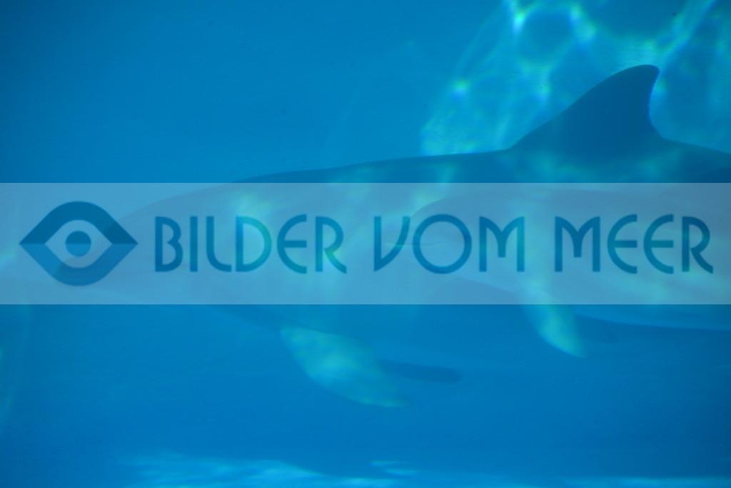 Delfin Bilder | Foto Baby Delfin mit Mutter
