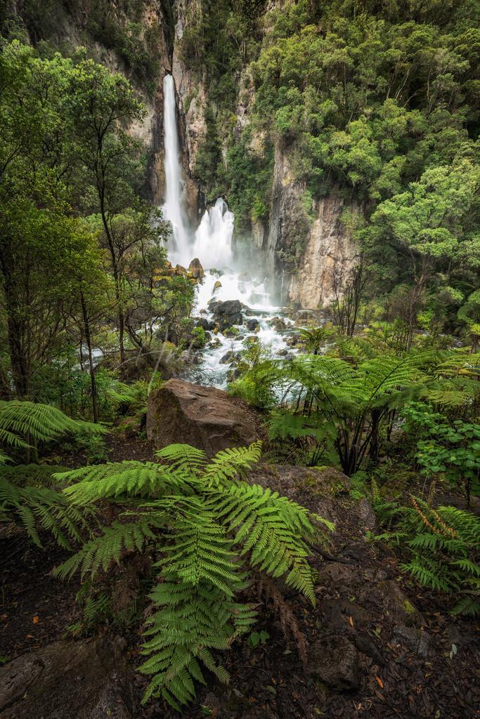 Farne und Wasserfälle