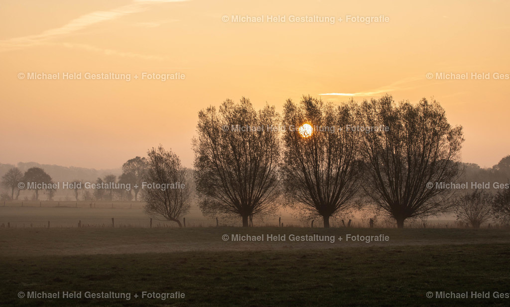 Frühnebel | Die Sonne kommt nur zögerlich durch die Bäume und taucht die Landschaft in ein sanftes Orange