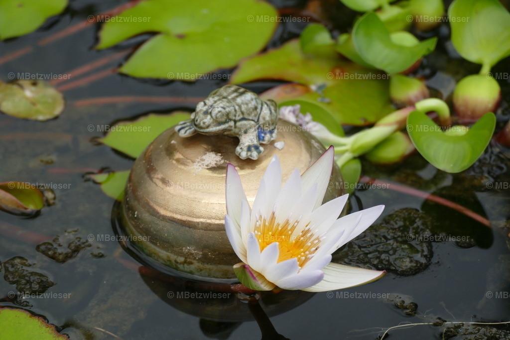 P1020082 | Seerose mit Frosch