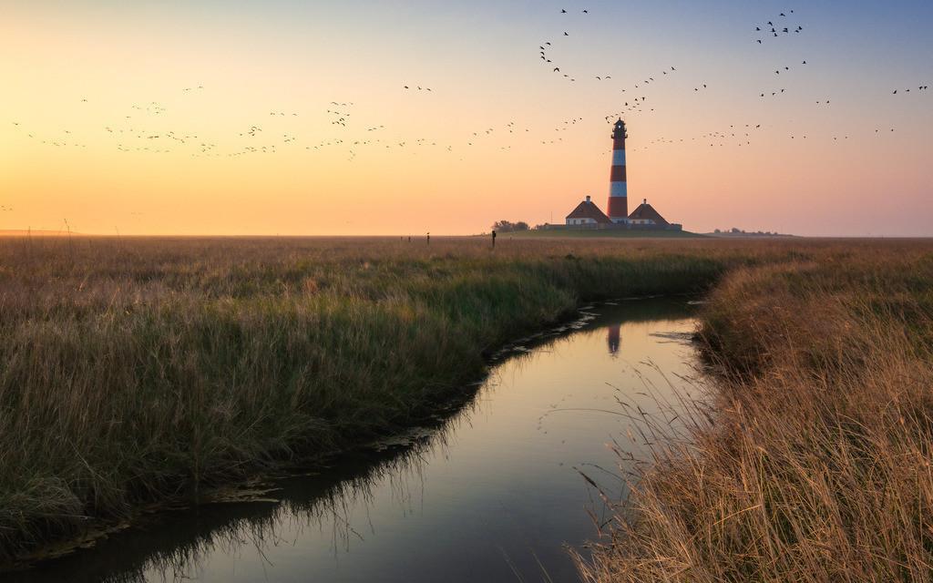 The Birds & The Lighthouse   Morgenstimmung am Leuchtturm Westerhever