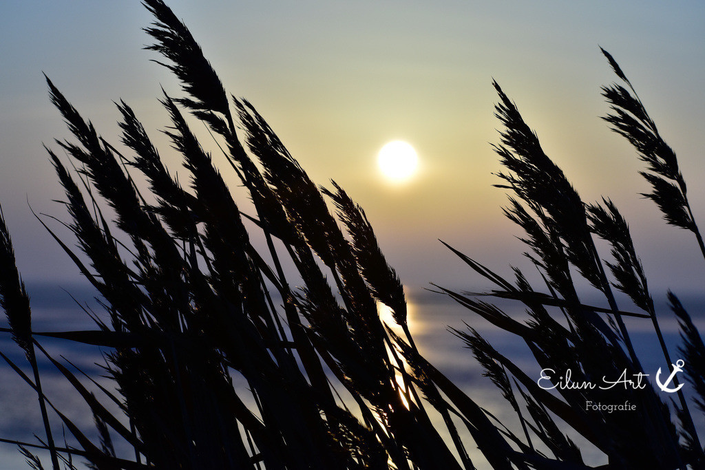A 4   Sonnenaufgang Greveling