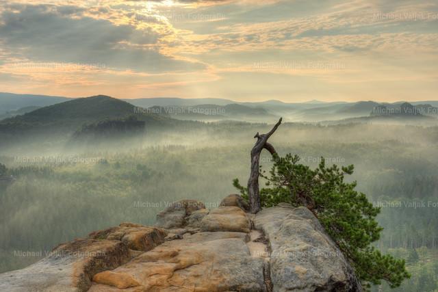 Stativkiefer im Elbsandsteingebirge | Morgens bei der berühmten Stativkiefer in den Affensteinen in der Sächsischen Schweiz. Die Sonne bringt die Nebelfelder und den Dunst zum Leuchten.