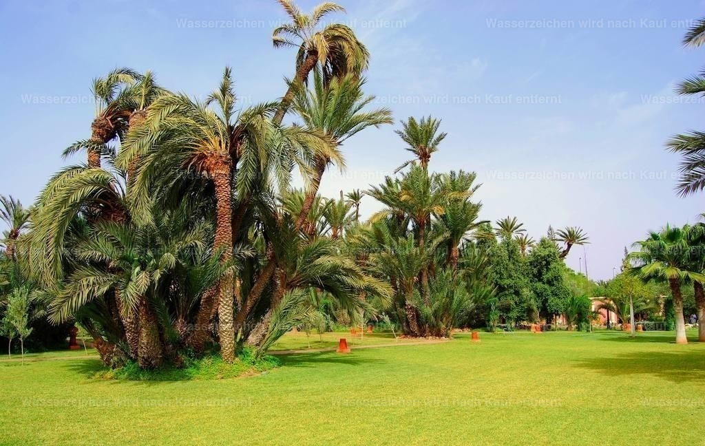 Marokkanischer Garten   Marokkanischer Garten