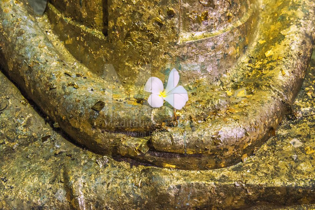 MW0117-6438 | Buddha-Statue mit einer Plumeria-Blüte (Frangipani)
