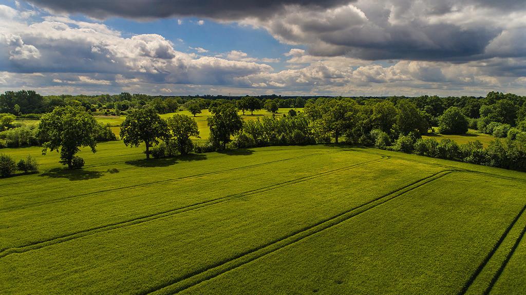 Junifeld | Getreidefeld im Juni in Bargteheide