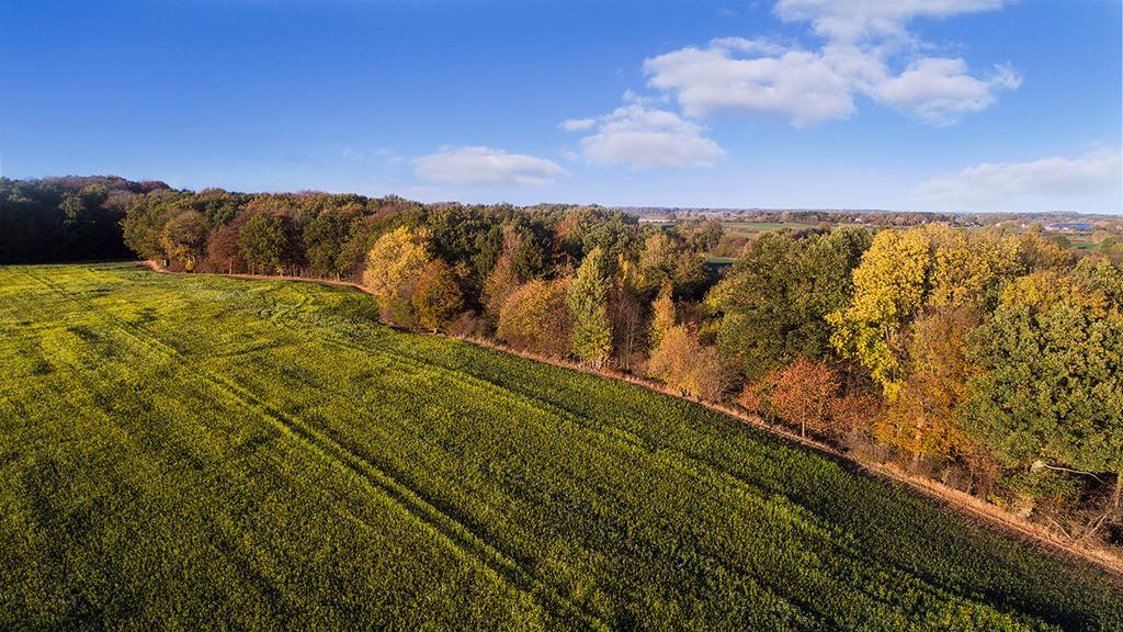 Herbstfeld | Landschaft zwischen Reinfeld und Hamberge, Stormarn, Schleswig-Holstein
