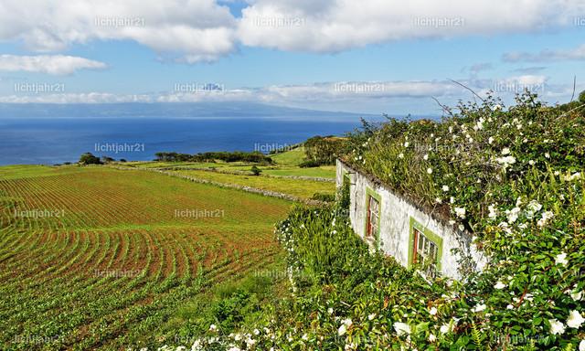 Azoren - Haus mit Blumen und Inselblick | Blick von der Azoren-Insel Sao Jorge zur Nachbarinsel Pico, im Vordergrund ein von Blumen überwachsenes Haus, über Felder und Hügel geht der Blick über das Meer zum teilweise in Wolken gehüllten Vulkanberg