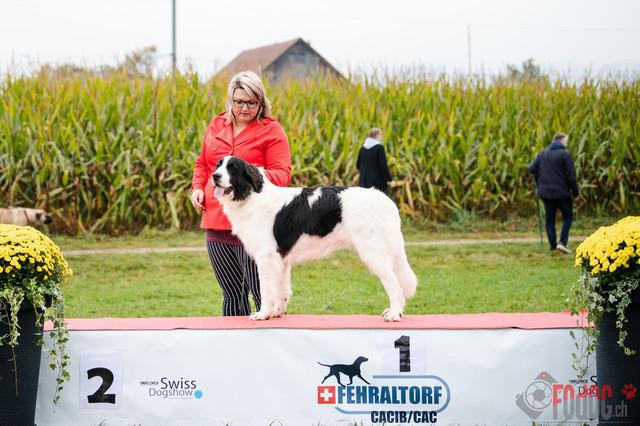 {event} | CACIB Fehraltorf Autumn Swiss Dog auf der Pferderennbahn in Fehraltorf  10.10.2021 Foto: Leo Wyden