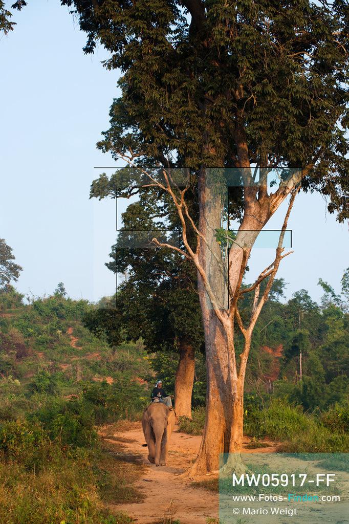 MW05917-FF   Thailand   Goldenes Dreieck   Reportage: Mahut und Elefant - Ein Bündnis fürs Leben   Mahut auf seinem Elefant im Morgenlicht   ** Feindaten bitte anfragen bei Mario Weigt Photography, info@asia-stories.com **